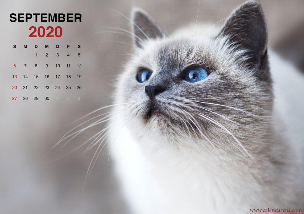 Kätzchen Wallpaper für September 2020 Kalender
