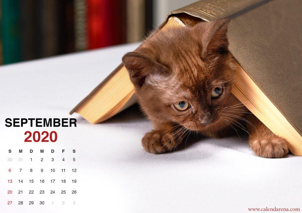 Kätzchen Wallpaper für September 2020 Kalender2
