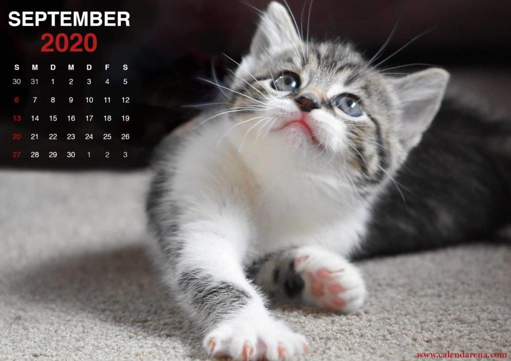 Kätzchen Wallpaper für September 2020 Kalender4