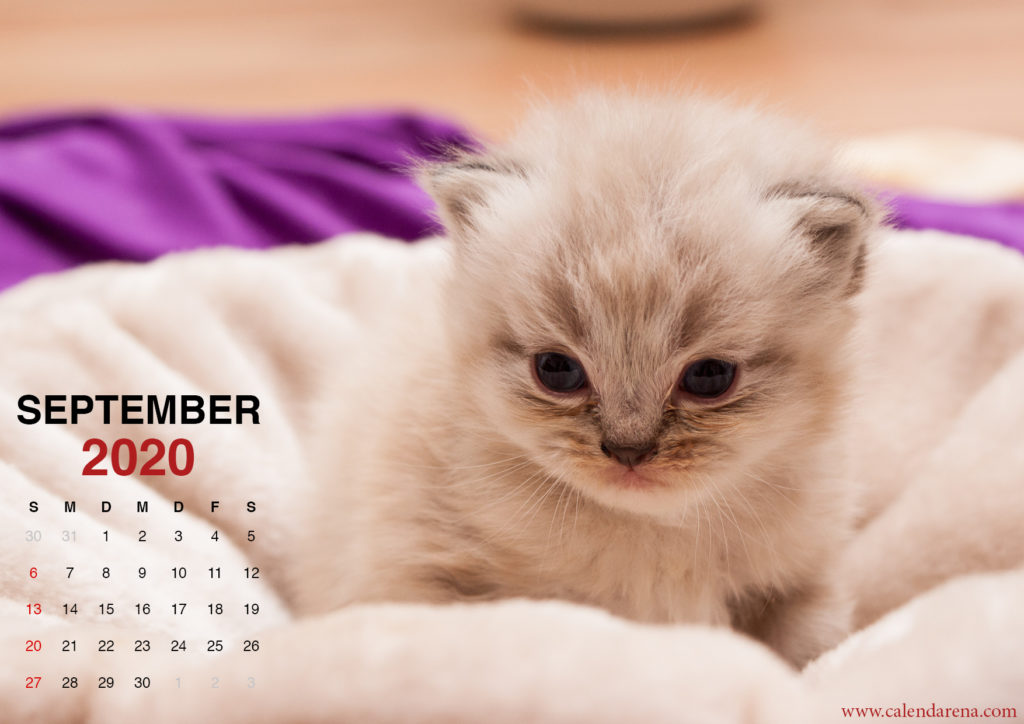 5 Kätzchen Wallpaper für 2020 kalender september
