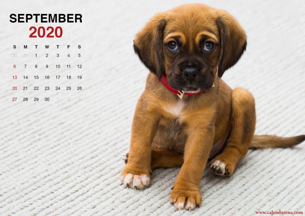September 2020 calendar little puppy