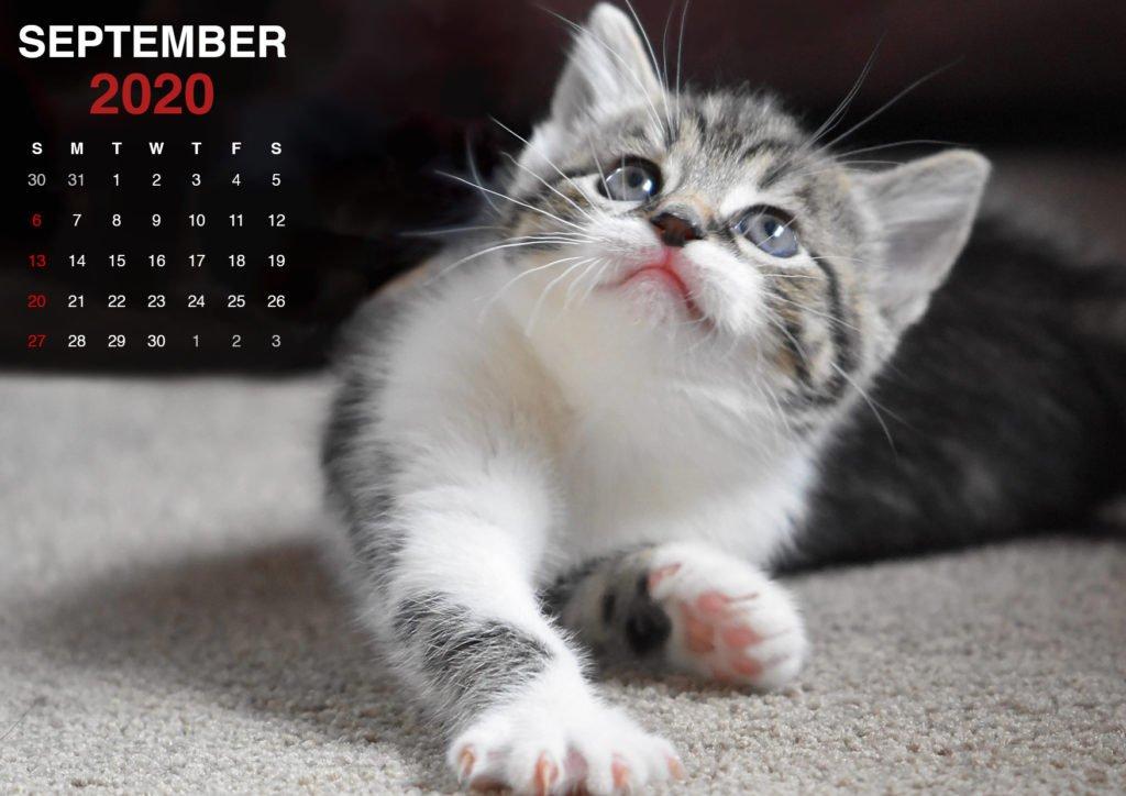 kitten wallpaper for september 2020 calendar4