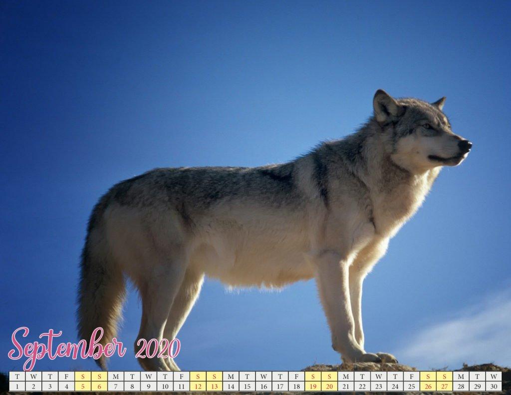 september 2020 calendar with puppies2