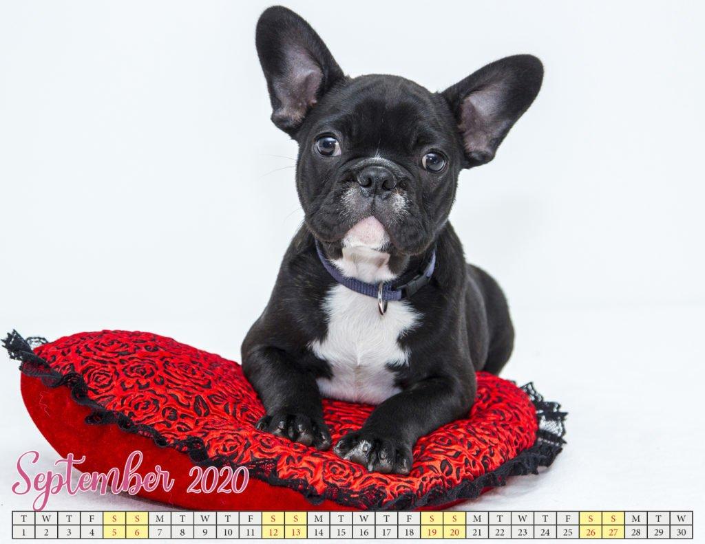 september 2020 calendar with puppies4
