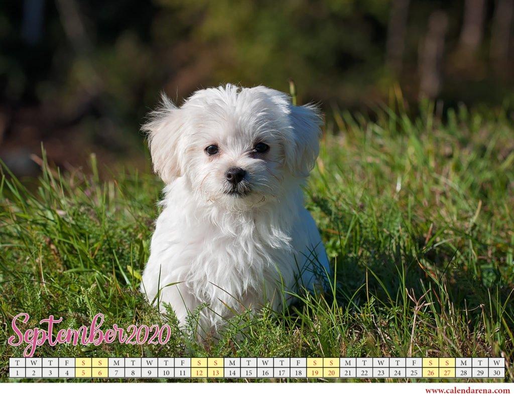 september 2020 calendar with puppy