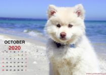 Calendar October 2020_2_en