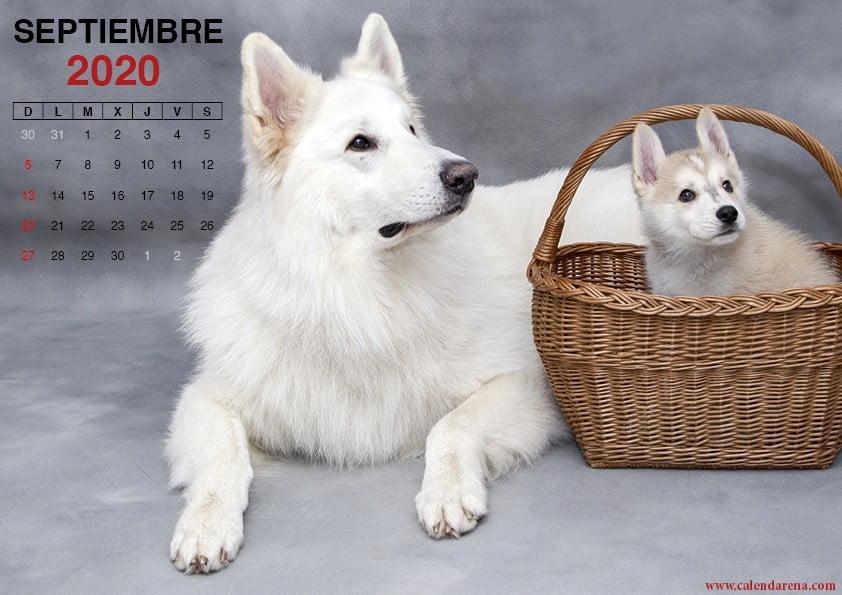 Calendario de septiembre de 2020 para imprimir cachorros
