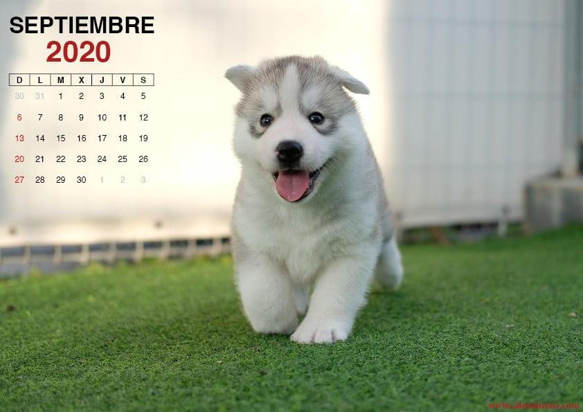 Calendario septiembre 2020 perrito2