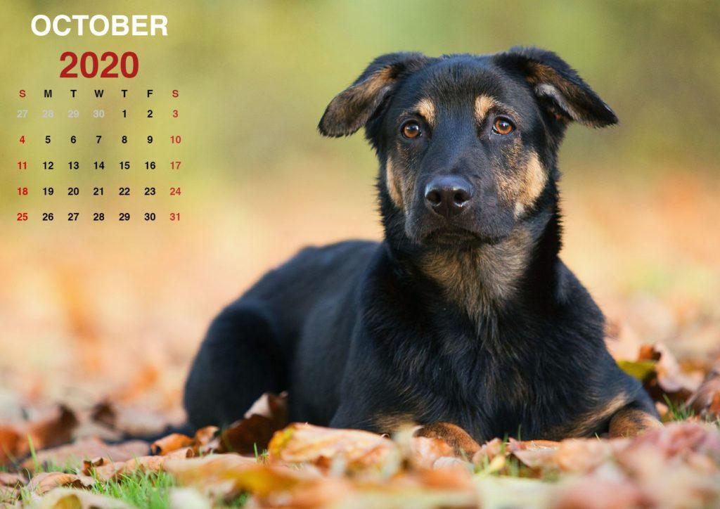 Printable October 2020 Calendar_en